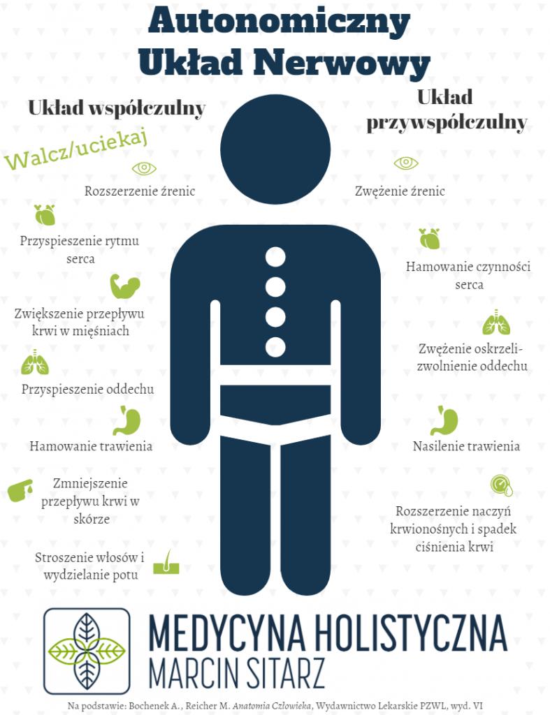 Autonomiczny układ nerwowy funkcje