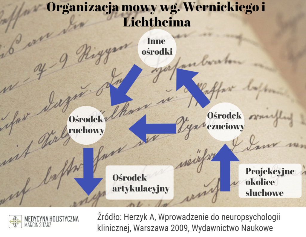 organizacja mowy wg. wernickiego i lichtheima