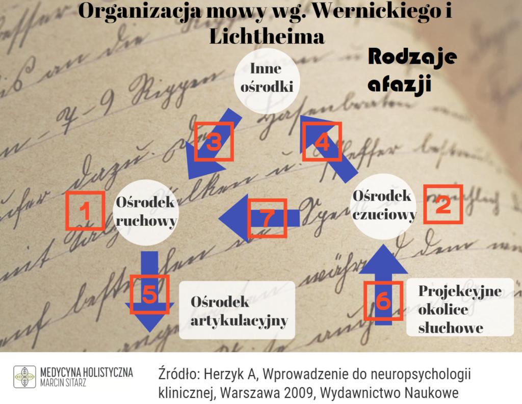 rodzaje afazji wg. wernickiego i Lichtheima