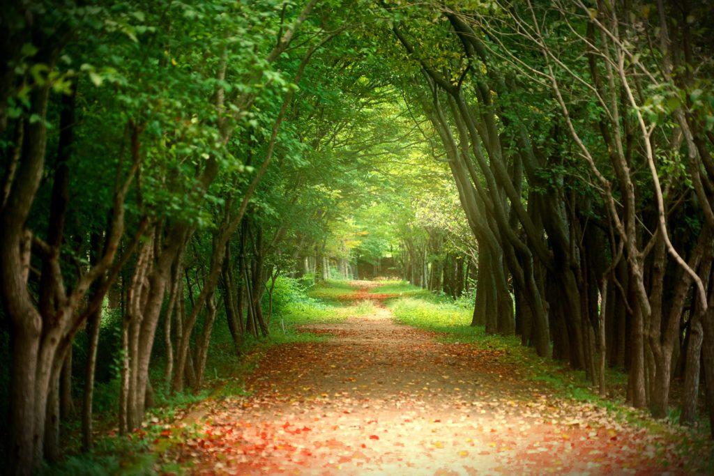 Nawet przyroda oglądana za pomocą techniki to lepsze rozwiązanie niż brak przyrody (Deb 2020 za Kahn i wsp. 2009) Źródło: pixabay