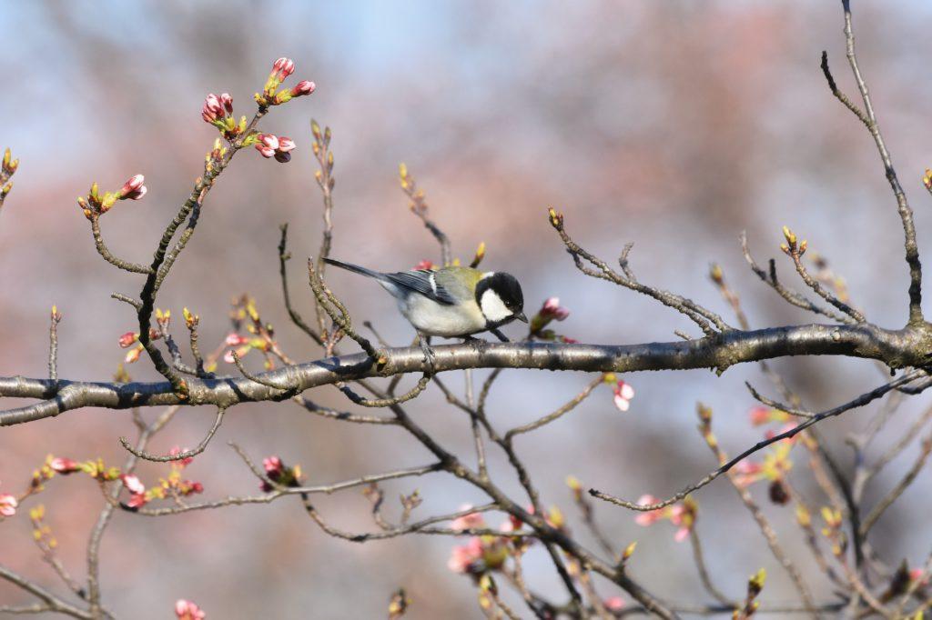 Przebywanie w otoczeniu przyrody redukuje reakcję współczulną a kontakt z przyrodą zmniejsza stres i zwiększa poczucie dobrostanu (Deb 2020 za Ewert, Klauning, Wang, Chang 2019) Źródło: pixabay