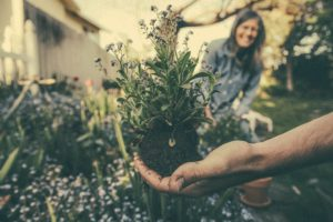 Hortiterapia terapia ogrodem